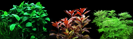 Aquarium Plants - overview