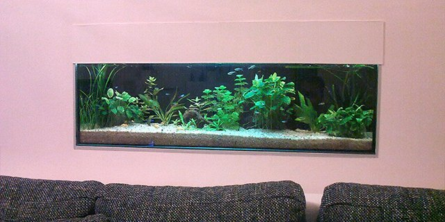 How to establish aquarium 120 liters.jpg